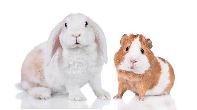 bunny and hamster