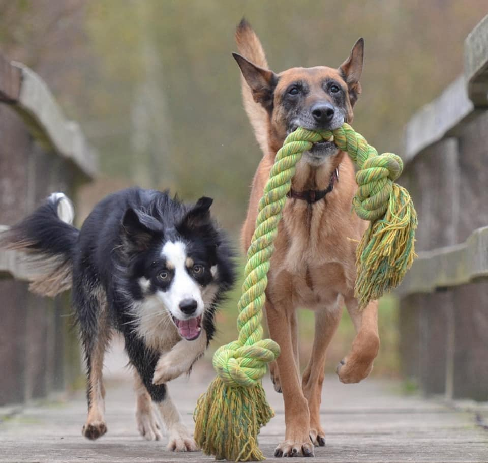 dogs with rope